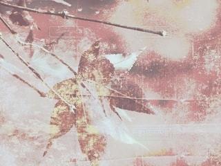 絵画館黄昏紅葉🍁の写真・画像素材[2507598]