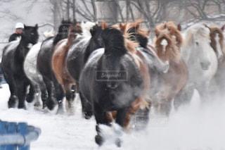 雪の中を走っている馬の群れの写真・画像素材[2885504]
