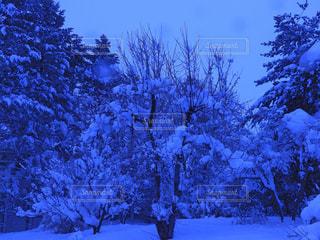 雪に覆われた森の写真・画像素材[2914262]