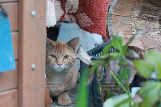 建物の上に座っている猫の写真・画像素材[2430358]