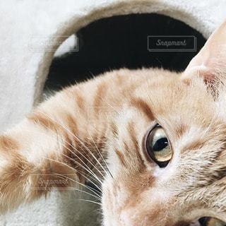 猫の写真・画像素材[93047]