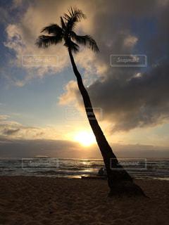 夕暮れ ヤシの木があるビーチの写真・画像素材[2421217]