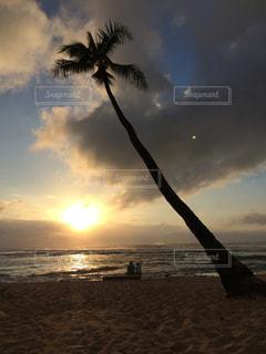 夕焼けの前 ヤシの木があるビーチの写真・画像素材[2421220]