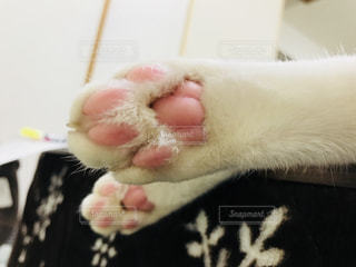 猫の肉球の写真・画像素材[2422996]