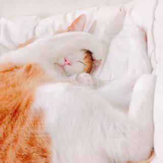 布団の上で眠る猫の写真・画像素材[2424245]