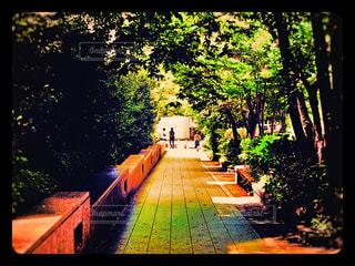 昼下がりの散歩道の写真・画像素材[2427390]