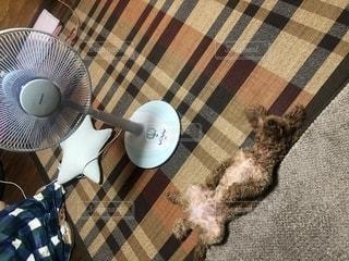 テーブルの上に横たわる猫の写真・画像素材[2438161]