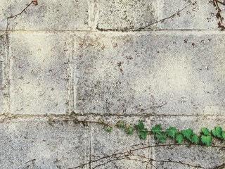 ブロック塀のクローズアップの写真・画像素材[2423870]