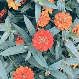 花のクローズアップの写真・画像素材[2434426]