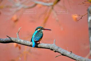 木の枝に飾られたカラフルな鳥の写真・画像素材[2426481]