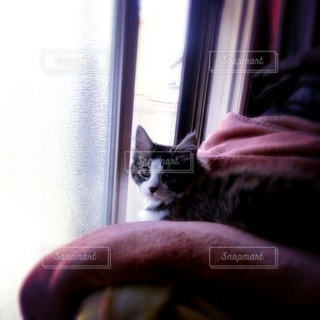 猫 - No.95669