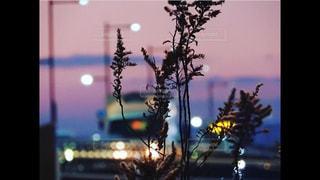 夜の街の眺めの写真・画像素材[2423393]