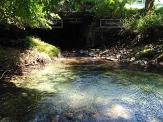 森を流れる川の写真・画像素材[2432777]