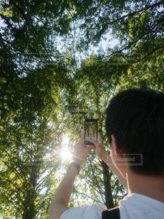 木漏れ日の写真・画像素材[2441378]