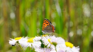 花のクローズアップの写真・画像素材[2428643]