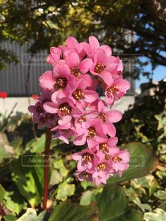 花のクローズアップの写真・画像素材[2429471]