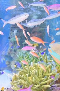 熱帯魚の泳ぐ水槽の写真・画像素材[2433131]