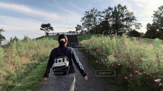 コスモス畑へ散歩の写真・画像素材[2645250]
