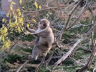 枝に座っている猿の写真・画像素材[2739208]