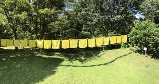 黄色いハンカチの写真・画像素材[2440026]