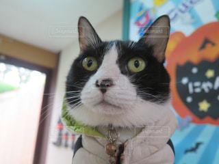 猫のクローズアップの写真・画像素材[2434900]
