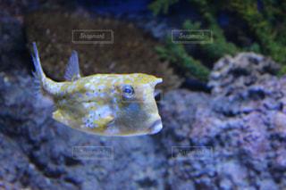 魚のクローズアップの写真・画像素材[2433734]