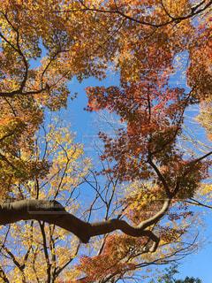 秋の写真・画像素材[2481686]