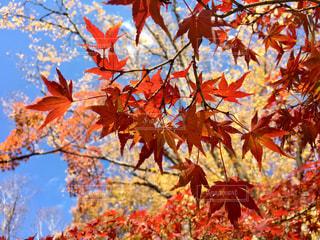 秋晴れの写真・画像素材[2481687]
