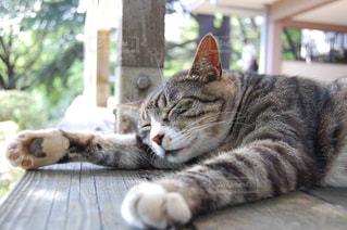 お昼寝の写真・画像素材[2486400]