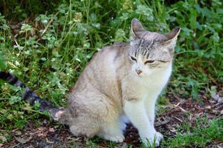 緑と猫の写真・画像素材[2506699]