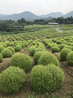庭の緑の植物の写真・画像素材[2435122]
