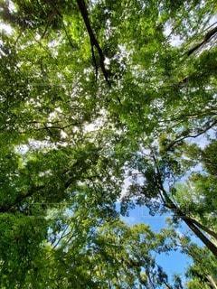 木漏れ日の写真・画像素材[2434773]