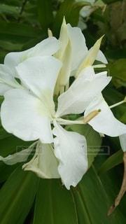 花のクローズアップの写真・画像素材[2435995]