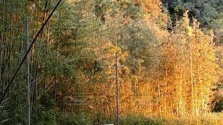 野原の木の写真・画像素材[2698841]