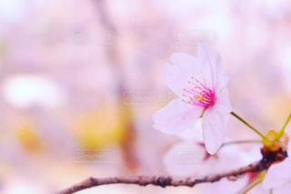 花のクローズアップの写真・画像素材[2437182]