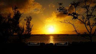 夕焼けと木の写真・画像素材[2438631]
