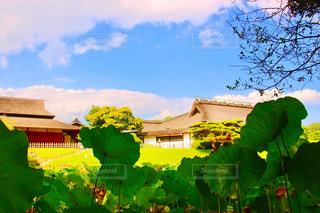 蓮子と家と空の写真・画像素材[2438793]