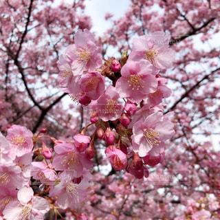 花のクローズアップの写真・画像素材[2441358]