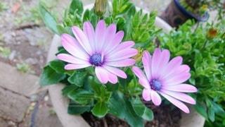 花のクローズアップの写真・画像素材[3092873]