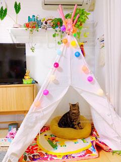 テントの中でくつろぐ猫の写真・画像素材[2441969]