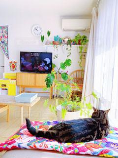 ベッドに横たわる猫の写真・画像素材[2505826]