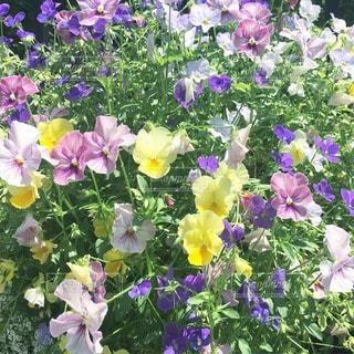 花の写真・画像素材[23668]