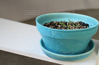 植物 - No.552766
