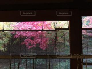 和室からの紅葉 - No.855078