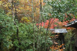 庭の紅葉の写真・画像素材[855079]