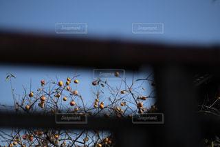 木の上に止まっている鳥のクローズアップの写真・画像素材[2712829]
