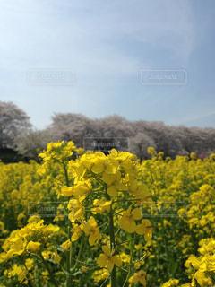 黄色とピンクと青のグラデーションの写真・画像素材[2443279]