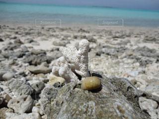 岩の上に立つサンゴの写真・画像素材[2444683]