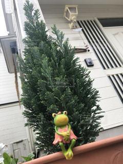 植木に座るカエルの写真・画像素材[2474955]