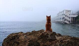 黄昏の犬の写真・画像素材[3649246]
